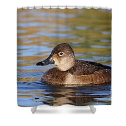 Shower Curtain featuring the photograph Female Ringneck by Ruth Jolly