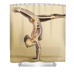 Female Skeletal System Shower Curtain by Anatomical Travelogue