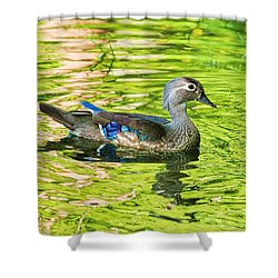 Female Wood Duck Shower Curtain by Deborah Benoit