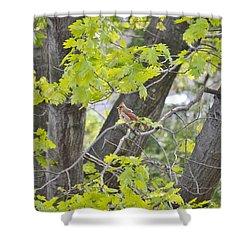 Feminine Cardinal Shower Curtain by Sonali Gangane