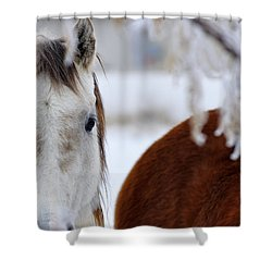 Fence Friend 13195 2 Shower Curtain by Jerry Sodorff