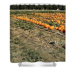 Fencing The Pumpkin Patch Shower Curtain