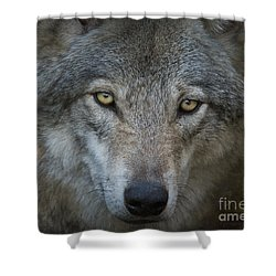 Fenris... Shower Curtain