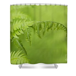Shower Curtain featuring the photograph Fern by Alana Ranney