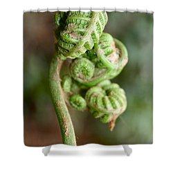 Fern Bud Shower Curtain by Venetia Featherstone-Witty