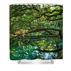 Fern Hammock Shower Curtain