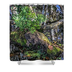 Fern In The Swamp Shower Curtain