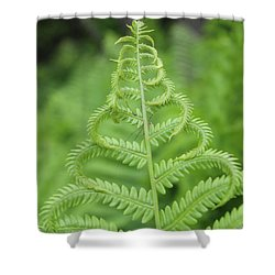 Fern Shower Curtain by Tiffany Erdman