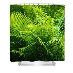 Ferns 1 Shower Curtain