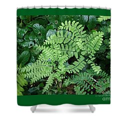 Ferns-iii Shower Curtain