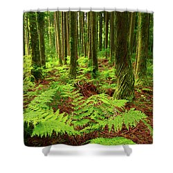 Ferns In The Forest Shower Curtain by Gaspar Avila