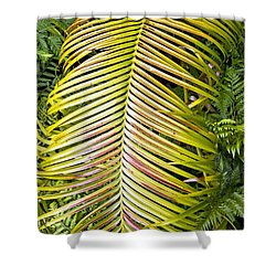 Shower Curtain featuring the photograph Ferns by Kate Brown
