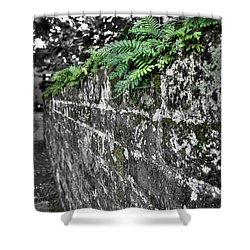 Ferns On Old Brick Wall Shower Curtain