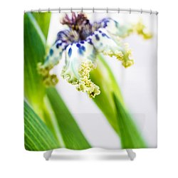 Ferraria Crispa Shower Curtain by Priya Ghose
