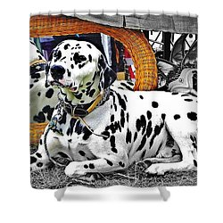 Festival Dog Shower Curtain