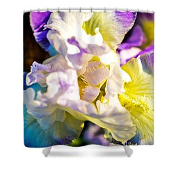 Fickle Iris  Shower Curtain by Mary Ward