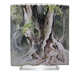 Ficus Aurea Shower Curtain by Rachel Christine Nowicki