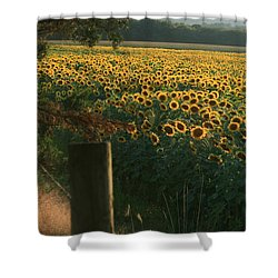 Field Dreams No.2 Shower Curtain