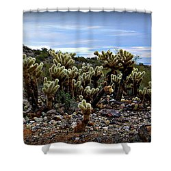 Shower Curtain featuring the photograph Field Of Cholla by Ruth Jolly