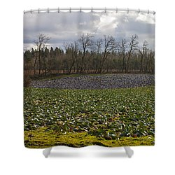 Field Of Color 2 Shower Curtain by Belinda Greb