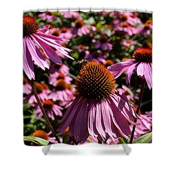 Field Of Echinaceas Shower Curtain