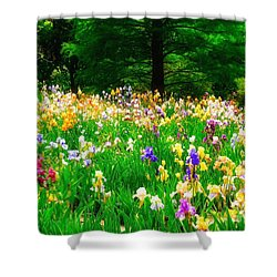 Field Of Iris Shower Curtain