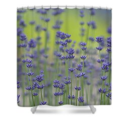 Field Of Lavender Flowers Shower Curtain