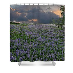 Field Of Lupine Shower Curtain