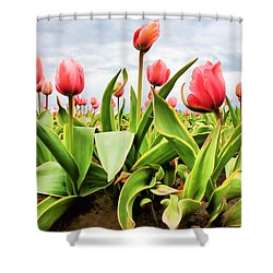 Shower Curtain featuring the photograph Field Of Pink Tulips by Athena Mckinzie