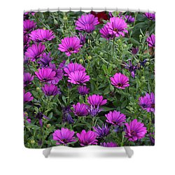 Shower Curtain featuring the photograph Field Of Purple by Ruth Jolly
