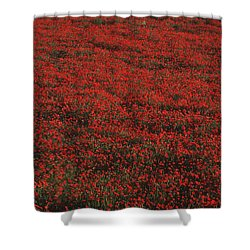 Field Of Red Poppies Shower Curtain by Ian Cumming