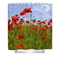 Field Of Red Poppies Shower Curtain by Melanie Viola