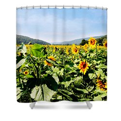 Shower Curtain featuring the photograph Field Of Sunflowers by Trina  Ansel