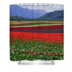 Field Of Tulips Shower Curtain by Jordan Blackstone