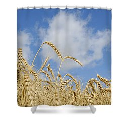 Field Of Wheat Shower Curtain by Charles Beeler