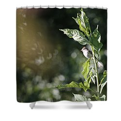 Field Sparrow Shower Curtain by Melinda Fawver
