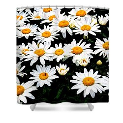Fields Of Daisies Shower Curtain by Pat Cook