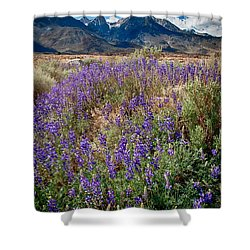Fields Of Lupine Shower Curtain