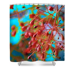 Fiery Red Clusters - Illawarra Flame Tree Shower Curtain
