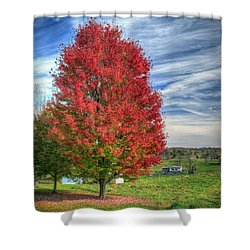 Fiery Red Maple Shower Curtain
