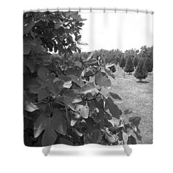 Fig Tree Shower Curtain