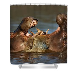 Fighting Hippo's Shower Curtain by Johan Swanepoel