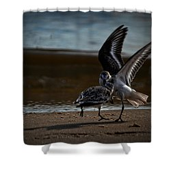 Fighting Sandpipers Shower Curtain