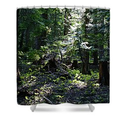 Shower Curtain featuring the photograph Filtered Sunlight Peace by Ben Upham III