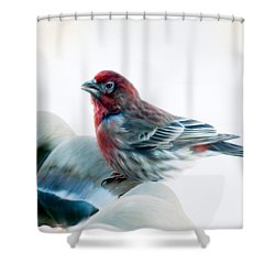 Shower Curtain featuring the digital art Finch by Ann Lauwers
