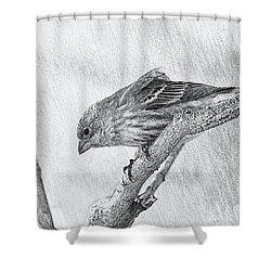 Finch Digital Sketch Shower Curtain