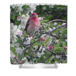 Finch In Apple Tree Shower Curtain