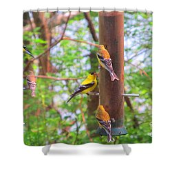 Shower Curtain featuring the photograph Finches Enjoying Their Snack by Tina M Wenger