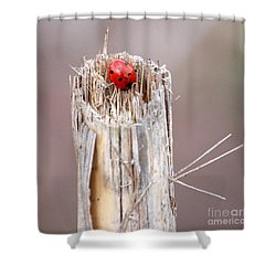 Fine Art- Ladybird Shower Curtain