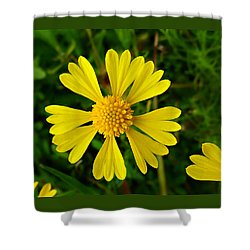 Shower Curtain featuring the photograph Wild Fine Leaved Sneezeweed by William Tanneberger